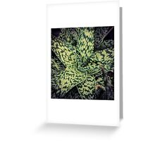 Succulents 12 Greeting Card