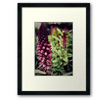 Flower 16 Framed Print