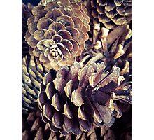 Pine Cones Photographic Print