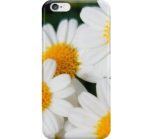 Daisies 2 iPhone Case/Skin