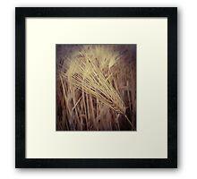Wheat Grass Framed Print