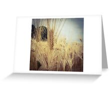 Wheat Grass 2 Greeting Card