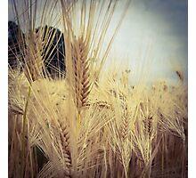Wheat Grass 2 Photographic Print