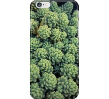 Succulents 13 iPhone Case/Skin