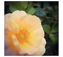 Millions of Peaches Photographic Print