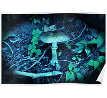 Lomography Mushroom Photography Poster