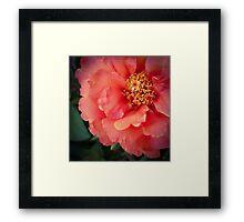 Flower 19 Framed Print