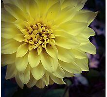 Flower 21 Photographic Print