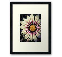 Flower 22 Framed Print