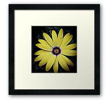 Flower 23 Framed Print