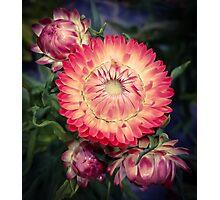 Flower 26 Photographic Print
