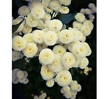 Spongey Flowers Photographic Print