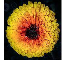 Flower 27 Photographic Print