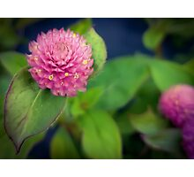 Teeny Flower Photographic Print