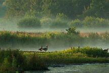 In Misty Morningland by steppeland