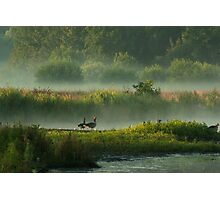 In Misty Morningland Photographic Print