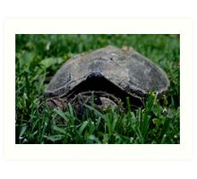 Contentious Common Snapping Turtle Art Print