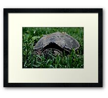 Contentious Common Snapping Turtle Framed Print
