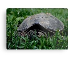 Contentious Common Snapping Turtle Metal Print