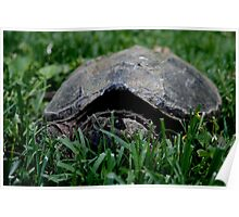 Contentious Common Snapping Turtle Poster
