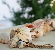 Colorful sea shells, shallow depth of field by Stanciuc