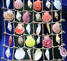 Colorful shells background by Stanciuc