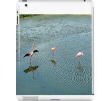 Galapagos Flamingoes Artwork iPad Case/Skin