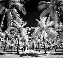 Surreal tropics  by mellosphoto