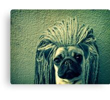 Do You Think I Need a Rasta Hat? Canvas Print