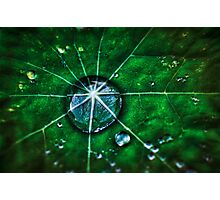 Droplett  Photographic Print