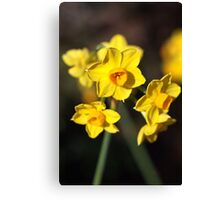 Jonquils Are Dancing Canvas Print