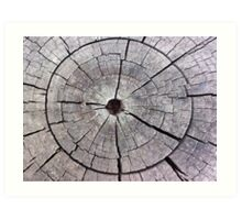 Weathered and Aged Wood Art Print