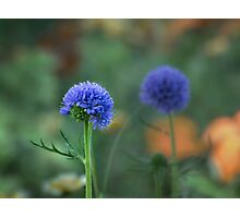 Blue twins Photographic Print