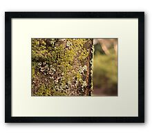 But Who Wants Moss Framed Print