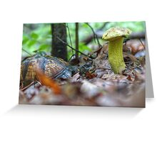 The Story of the Turtle and the Mushroom. . . Greeting Card