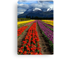 Tulips at the foot of the mountain. Canvas Print