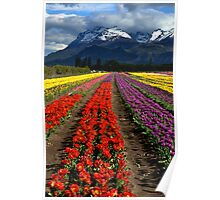 Tulips at the foot of the mountain. Poster