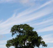 Oak tree landscape Sticker