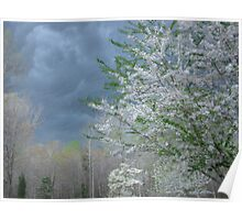 Cherry Tree in a Thunderstorm Poster