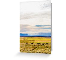 Icelandic horses on a beautiful green field with amazing colored sky, Iceland Greeting Card