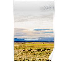 Icelandic horses on a beautiful green field with amazing colored sky, Iceland Poster