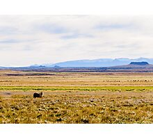 Icelandic horses on a beautiful green field with amazing colored sky, Iceland Photographic Print