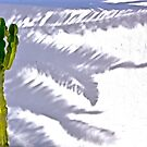 Cactus by Jean-Luc Rollier