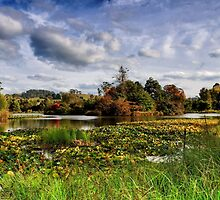 Autumn at the Pool of Serenity by Claire Walsh