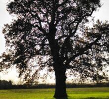 Backlit Tree Sticker