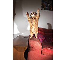 Excited cat Photographic Print