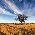 Coonamble Harvest by David Haworth