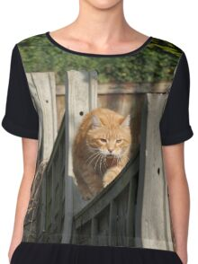 Ginger cat on garden fence Chiffon Top