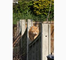 Ginger cat on garden fence Unisex T-Shirt
