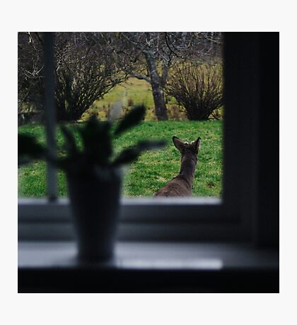 A deer on backyard adventures Photographic Print